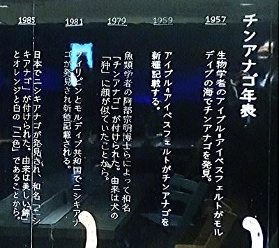 2011 チンアナゴの日53_すみだ水族館1111o (208)‐2アクアアカデミー.JPG