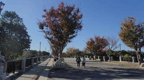 201122-01葛西臨海公園1121o (1).JPG