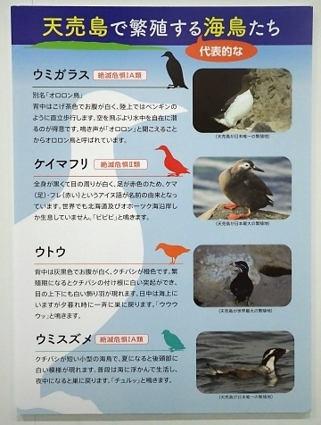 201122-14葛西臨海公園1121o (17)つどえオロローン関連展示.JPG