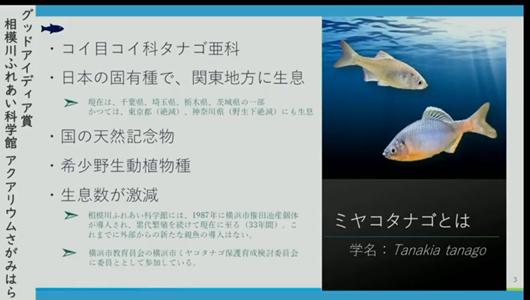 201205エンリッチメント大賞-29_Screenshot_20201205 (80)アクアリウムさがみはら_ミヤコタナゴ.png