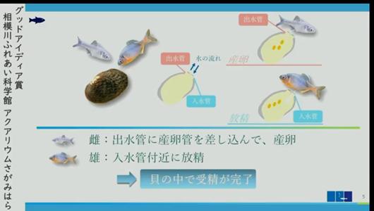 201205エンリッチメント大賞-30_Screenshot_20201205 (82)アクアリウムさがみはら_ミヤコタナゴ.png