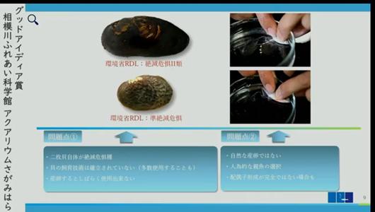 201205エンリッチメント大賞-33_Screenshot_20201205 (89)アクアリウムさがみはら_ミヤコタナゴ.png