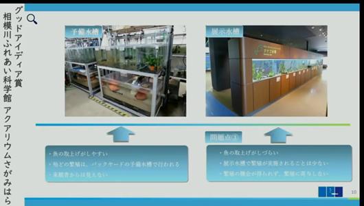201205エンリッチメント大賞-34_Screenshot_20201205 (90)アクアリウムさがみはら_ミヤコタナゴ.png