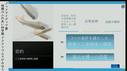 201205エンリッチメント大賞-35_Screenshot_20201205 (93)アクアリウムさがみはら_ミヤコタナゴ.png
