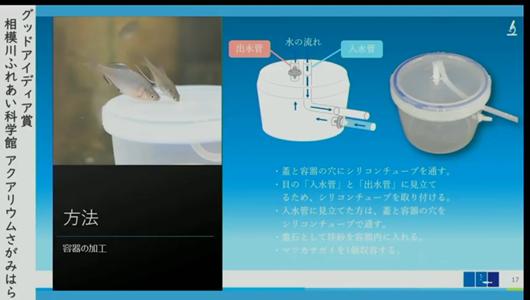 201205エンリッチメント大賞-36_Screenshot_20201205 (95)アクアリウムさがみはら_ミヤコタナゴ.png