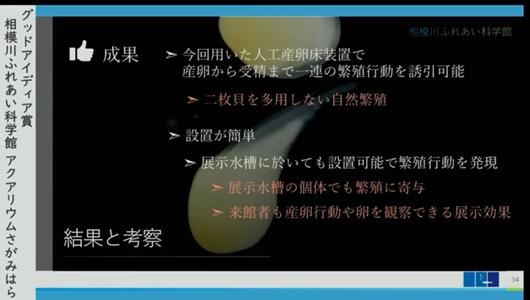 201205エンリッチメント大賞-37_Screenshot_20201205 (105)アクアリウムさがみはら_ミヤコタナゴ.png