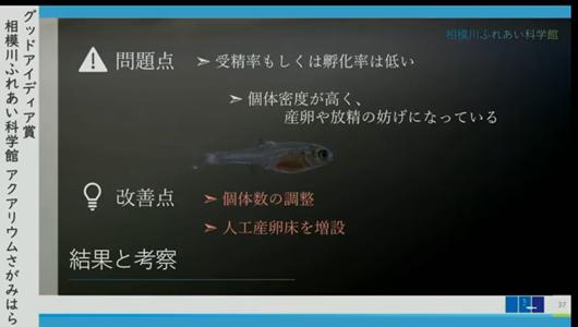 201205エンリッチメント大賞-38_Screenshot_20201205 (107)アクアリウムさがみはら_ミヤコタナゴ.png