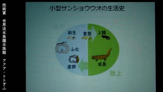 201205エンリッチメント大賞-42_Screenshot_20201205 (116)アクアトトぎふ_マホロバサンショウウオ.png