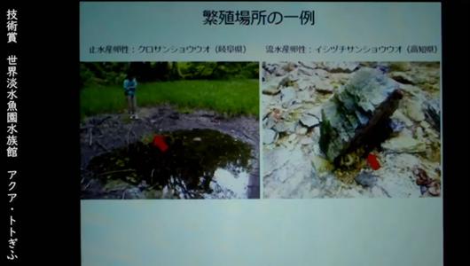 201205エンリッチメント大賞-43_Screenshot_20201205 (117)アクアトトぎふ_マホロバサンショウウオ.png