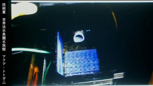 201205エンリッチメント大賞-45_Screenshot_20201205 (122)アクアトトぎふ_マホロバサンショウウオ.png