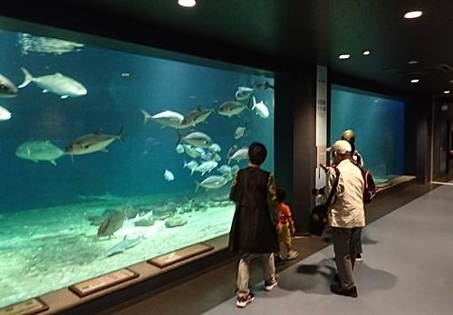 20191025_京大白浜水族館02_1020 (8).JPG