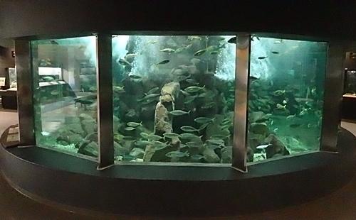 20191025_京大白浜水族館09_1020 (154)円形水槽.JPG