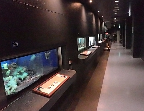 20191025_京大白浜水族館20_1020  (172) マリンギャラリー.JPG