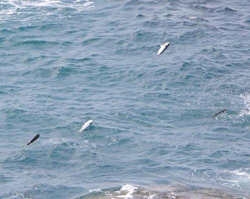 20191025_南紀白浜_千畳敷-1020 p (39)跳ねてた魚.JPG