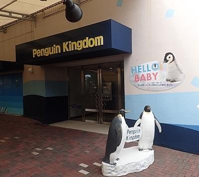 20191025_白浜アドベン10-1020o (8)ペンギン王国.JPG