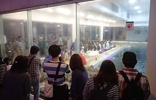 20191025_白浜アドベン10-1020o (91)ペンギン王国.JPG