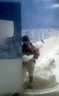 20191025_白浜アドベン33-1020o (174)キングペンギンを抱えて運び出す(ペンギンアカデミー用).JPG