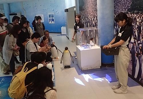 20191025_白浜アドベン33-1020o (197)キングペンギン_ペンギンアカデミー.JPG