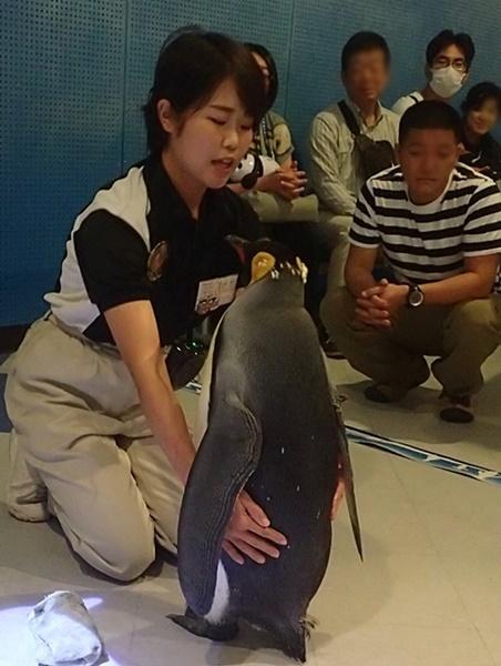 20191025_白浜アドベン34-1020o (204)キングペンギン_ペンギンアカデミー_ペンギンふれあい_おさわり.JPG