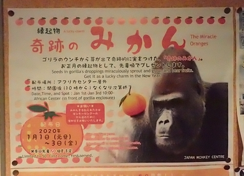 202001 犬山モンキーセンター_11_0103o (74)奇跡のミカン.JPG