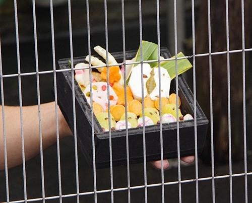 202001 犬山モンキーセンター_30_0103p (104)サルおせち_シロガオサキ_モップ君.JPG