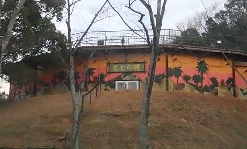 202001 犬山モンキーセンター_81_0103o (386)ヒヒの城.JPG