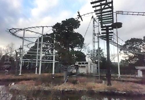 202001 犬山モンキーセンター_90_0103o (363)ビッグループ_テナガザル.JPG