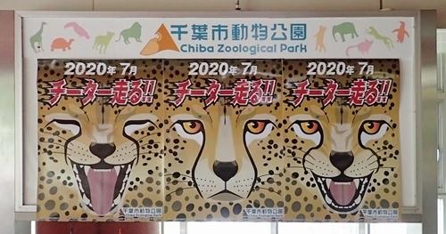 202007千葉市zoo_01_0724(0)チーターポスタ.JPG