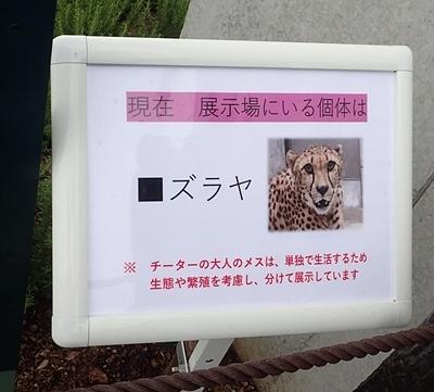 202007千葉市zoo_20_0724o (44)チーター舎_ズラヤ.JPG