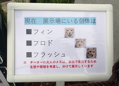 202007千葉市zoo_27_0724o (163)チーター_3頭_午後出場_名前.JPG