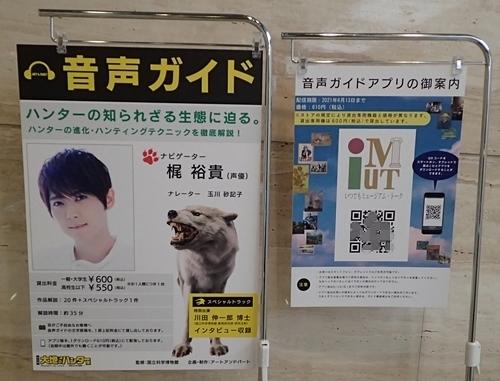 202103_科博_大地のハンター展_02_o (7)音声ガイド_梶裕貴 (2).JPG
