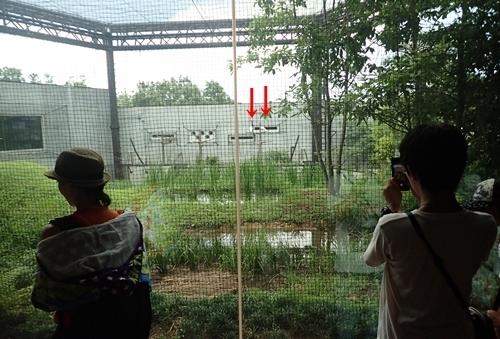 いしかわ動物園1708_トキ里山館1.JPG