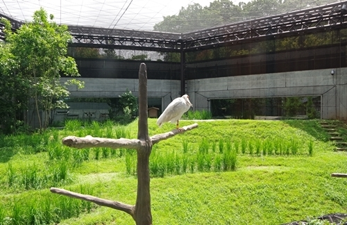 いしかわ動物園1708_トキ里山館ひろびろ.JPG