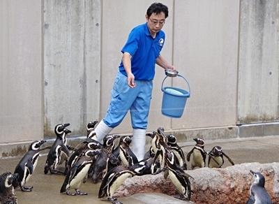 いしかわ動物園_ペンギン食事.JPG