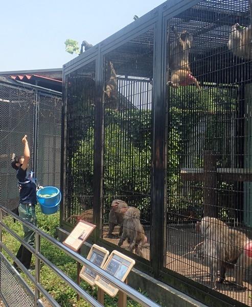 東武動物公園マントヒヒ_餌投げ.JPG