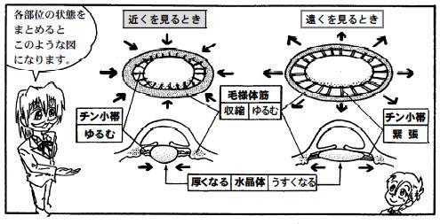 081015 目の構造(8)-1