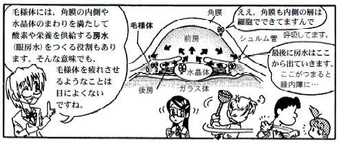 081016 目の構造(9)-1