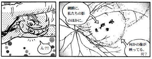 081030 目の構造(11)-1