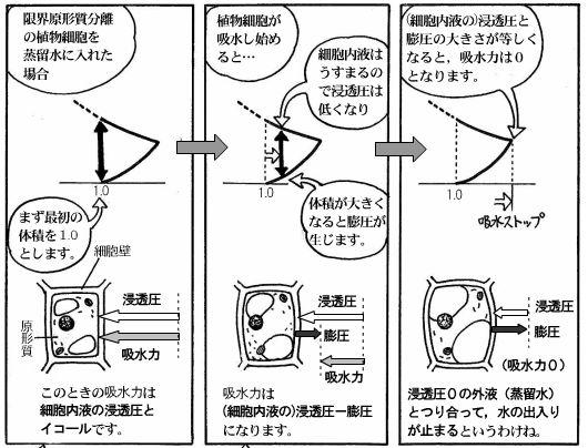 moebio081112_浸透圧-10-1.JPG