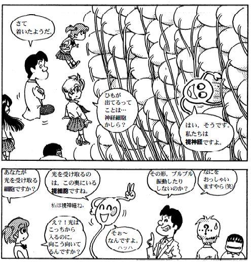 081127 目の構造(12)-2