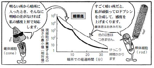 090124 目の構造(18)-1