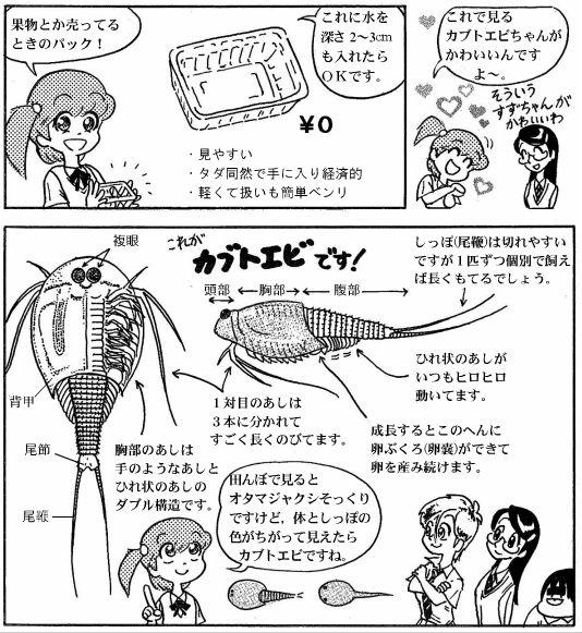 moebio09_カブトエビ-02-2.jpg