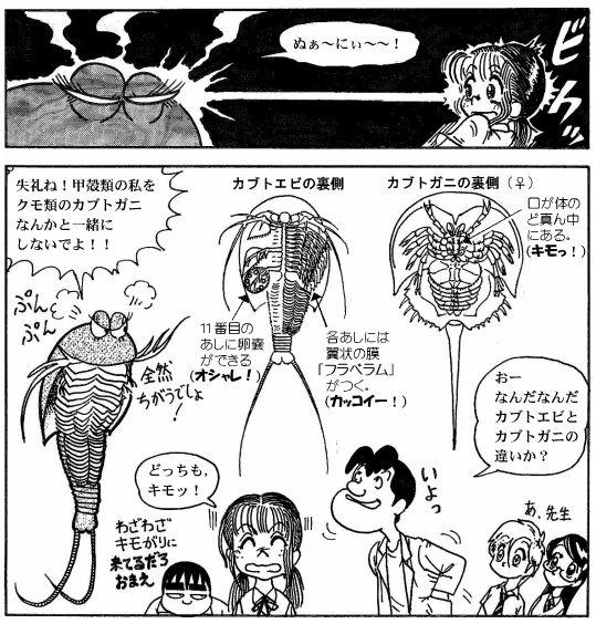 moebio09_カブトエビ-06-2.jpg