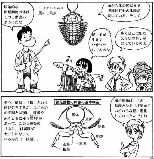 moebio09_カブトエビ-08-2.jpg