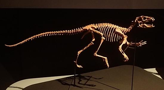 160404 科博_恐竜博 ヘテロドントサウルス.JPG