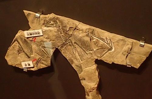 160404 科博_恐竜博 飛翔恐竜 イー.JPG