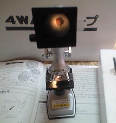 090820 くもん顕微鏡スクリーン.jpg