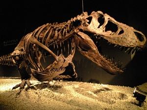 110924 ティラノサウルス.jpg