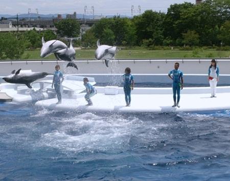 120724 京都水族館イルカ.JPG