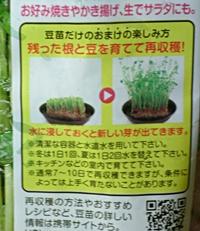 121229 豆苗栽培可.JPG